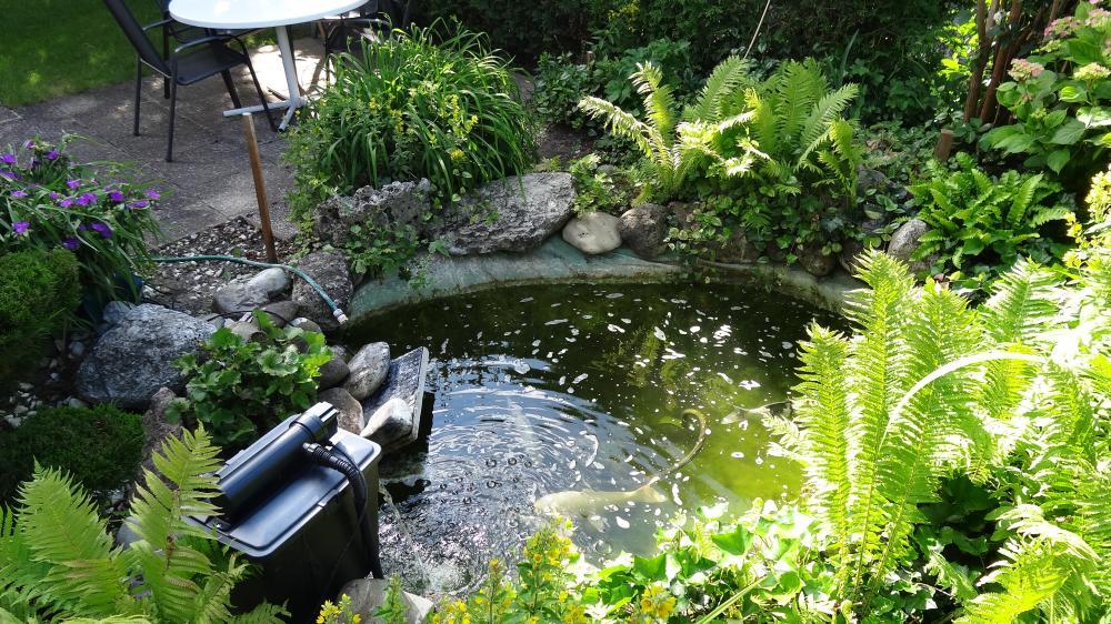 Ausgangslage war der alte und kleine Teich mit knapp 2 m3