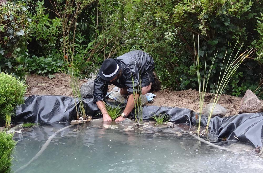 Die Wasserregulierenden Wasserpflanzen werden gesetzt